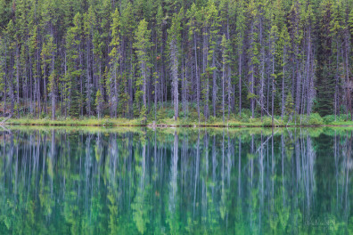 Green trees reflected in a lake in Jasper Canada.