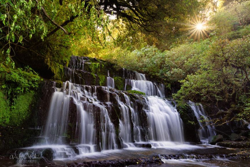 A lush rainforest with a waterfall and the sun breaking through the trees.