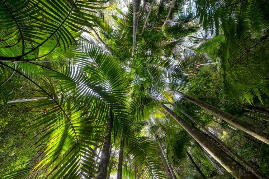 Undernath a canopy of palm trees looking up.