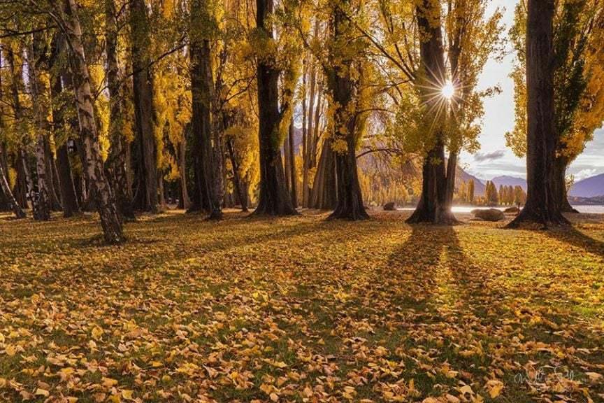 Fall leaves underneath sun lit trees.