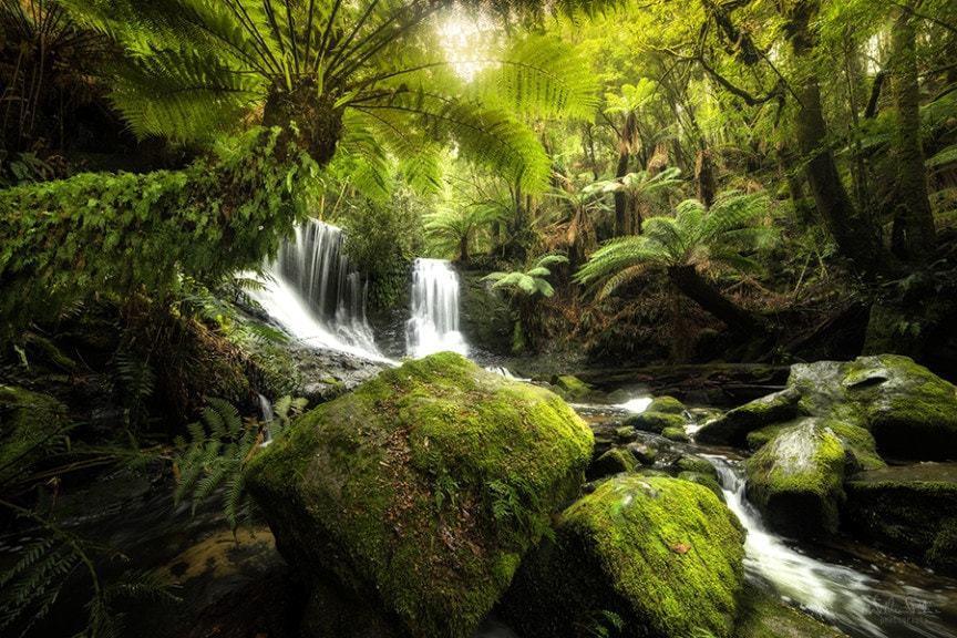 A lush forest in Tasmania.