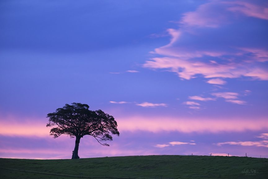 A lone tree silhouetted with a colorful sunset.