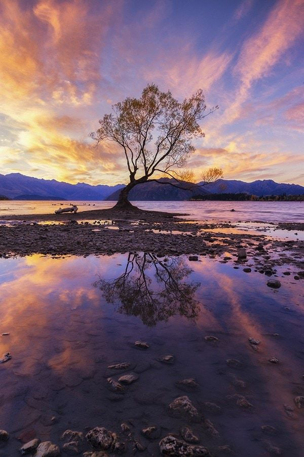 A lone tree by a lake at sunset
