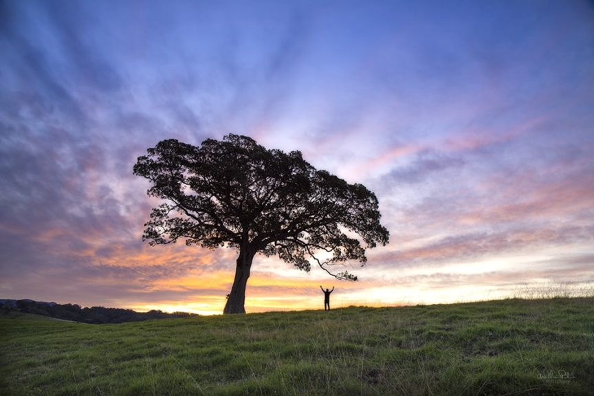 A man standing under a big lone tree at sunset.