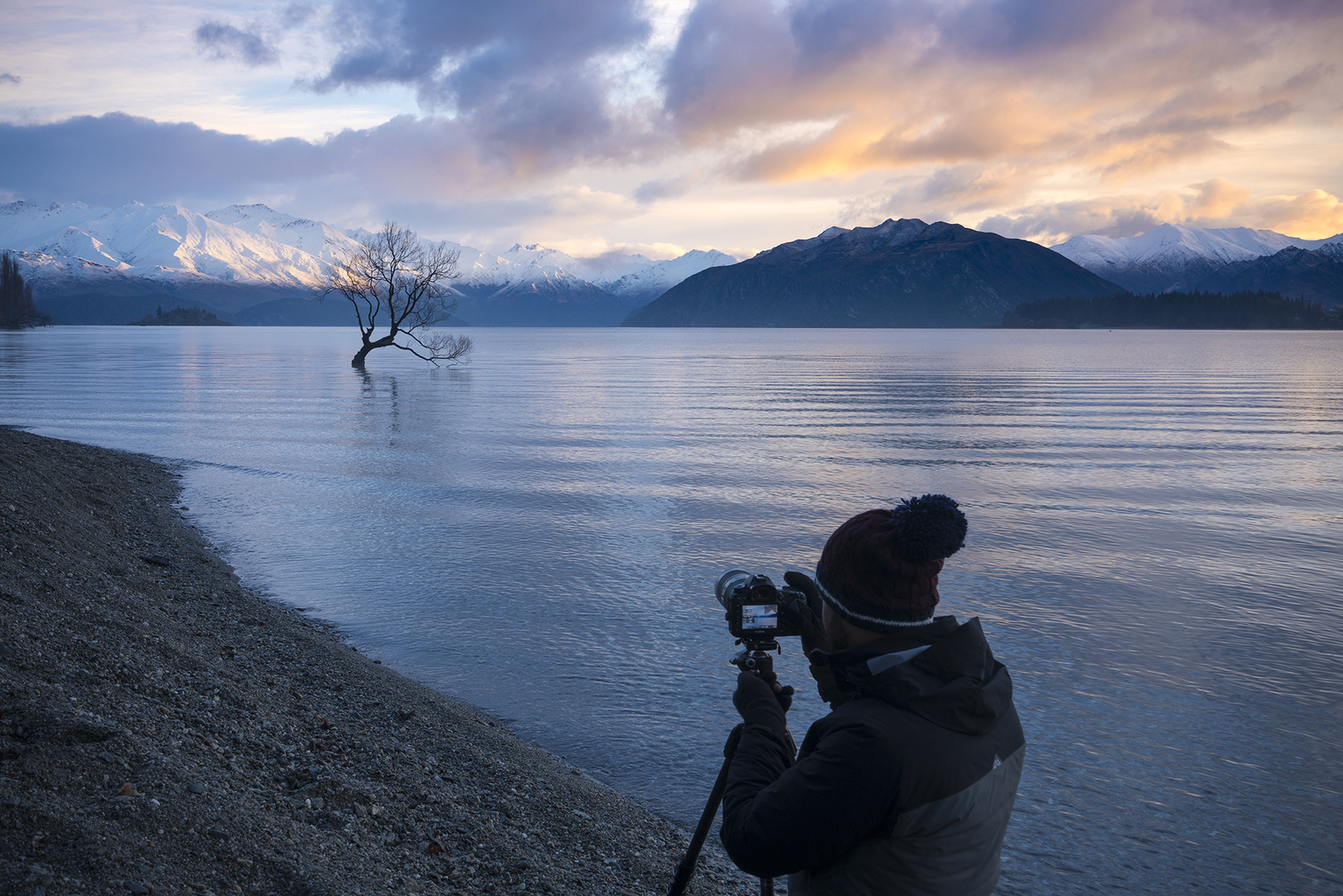 Photographing the Wanaka tree