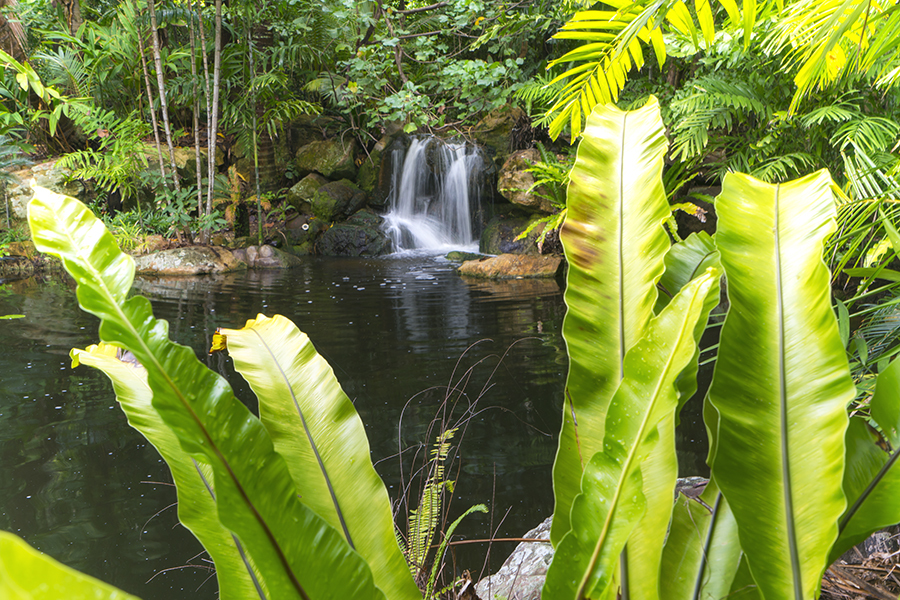 Waterfall Hayman Island QLD