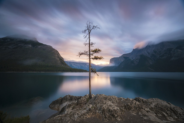 Sunrise, Lake Minnewanka Tree
