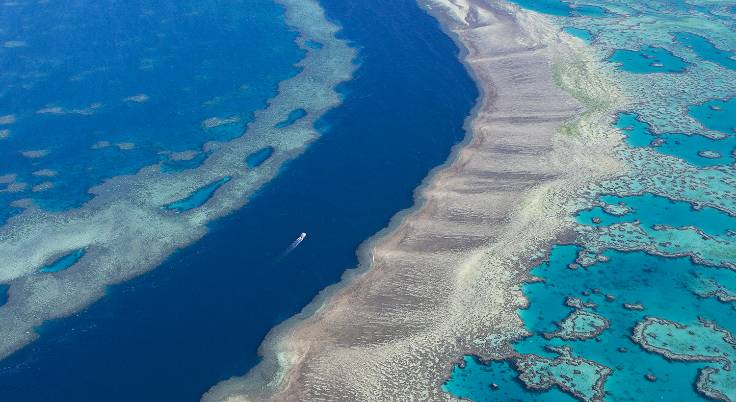 William_Patino_Barrier_Reef_Queensland