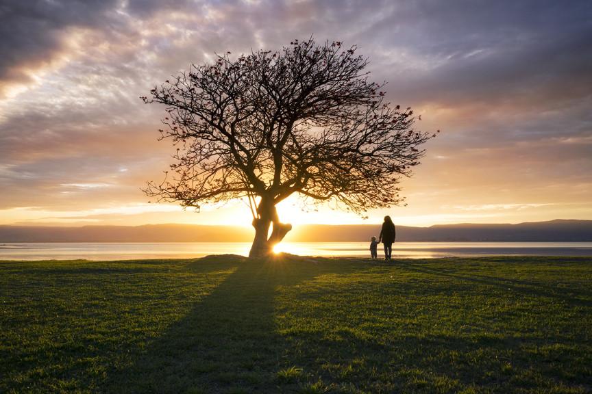 Sunset, Windang Tree NSW Australia