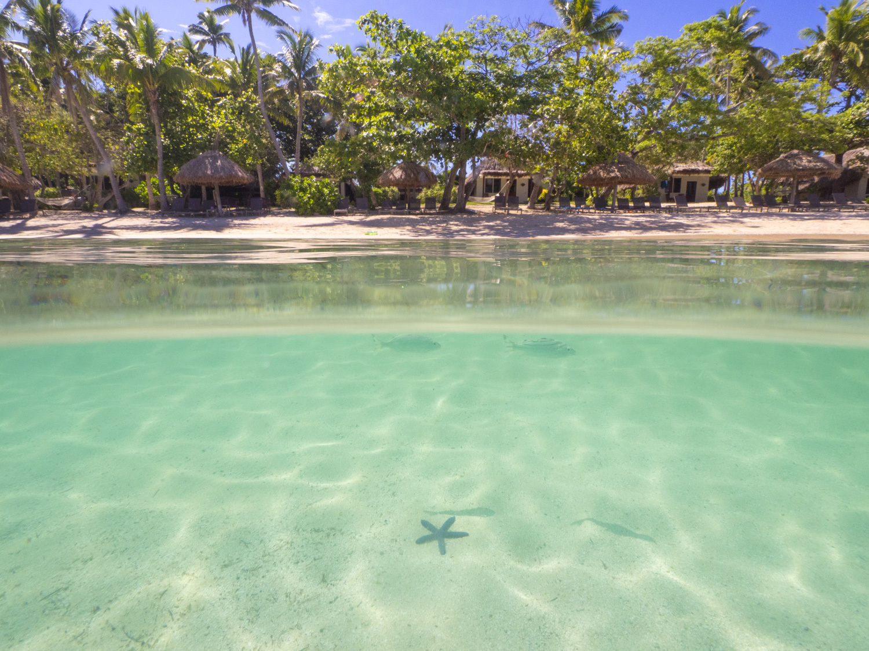 Castaway Island Fiji Starfish
