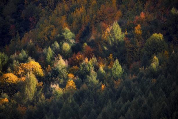 Morning sunlight through autumn trees in New Zealand