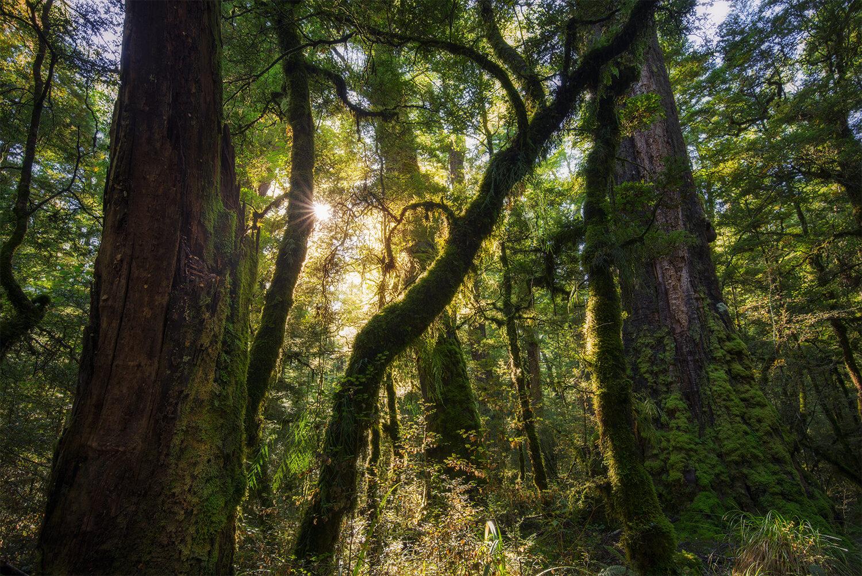 Fiordland forest, New Zealand South Island
