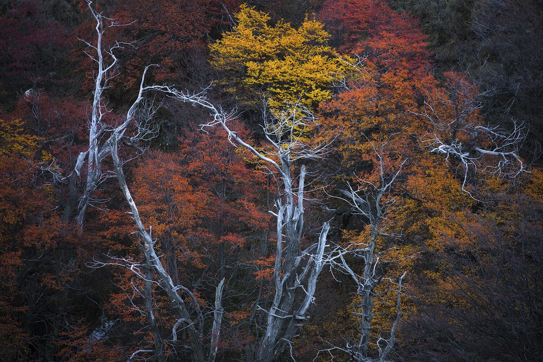 Autumn colours, Patagonia