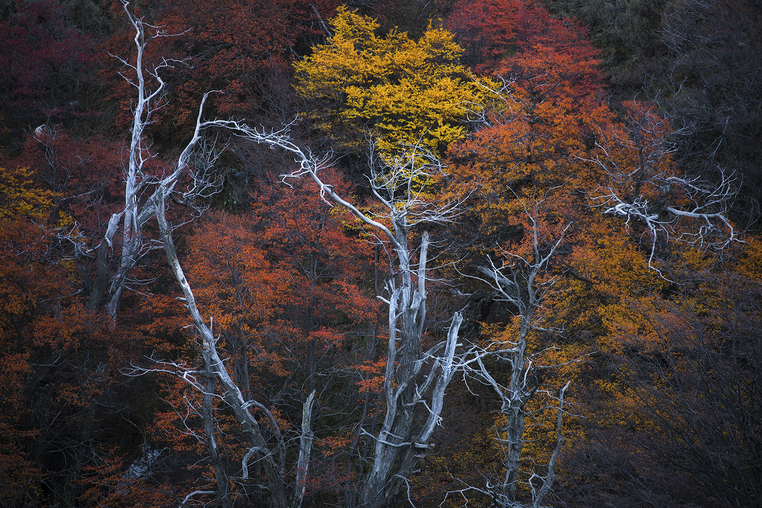 Patagonia Autumn Trees