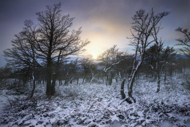 Winter trees, Patagonia