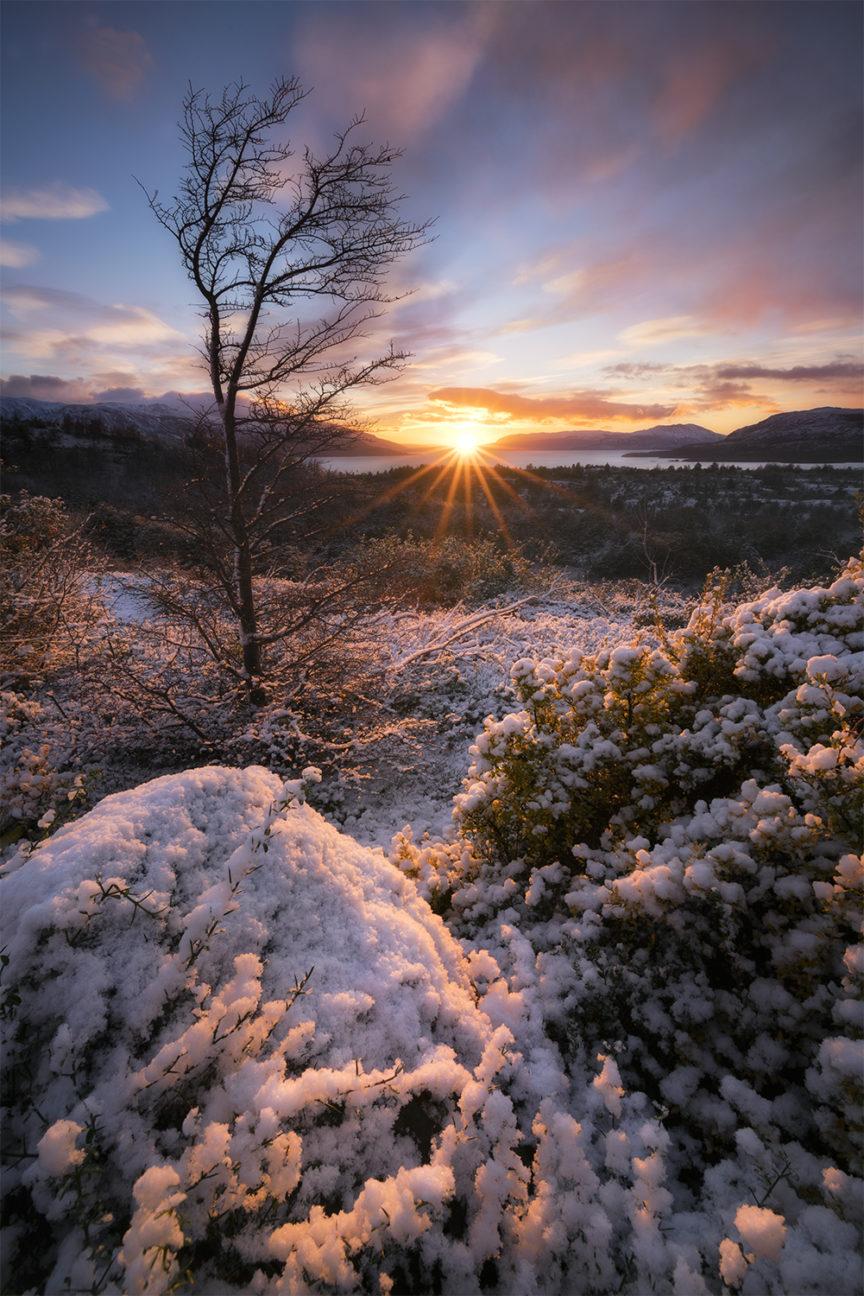 Sunrise, Torres Del Paine tree
