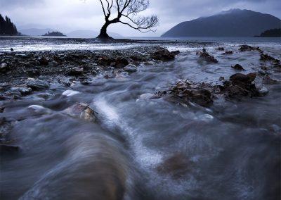wanaka_tree_NZ copy