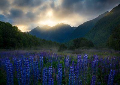 Cascade-Creek-Lupins