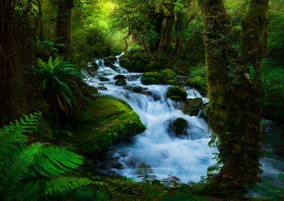 Fiordland-Forest-Cascade-William-Patino