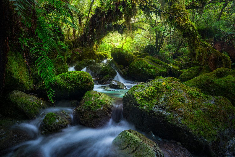 Cascades and beech forest