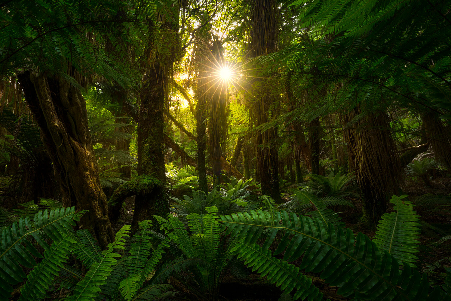 Wild forest, wilderness New Zealand