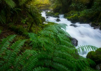 Fiordland-Forest-William-Patino-Photography