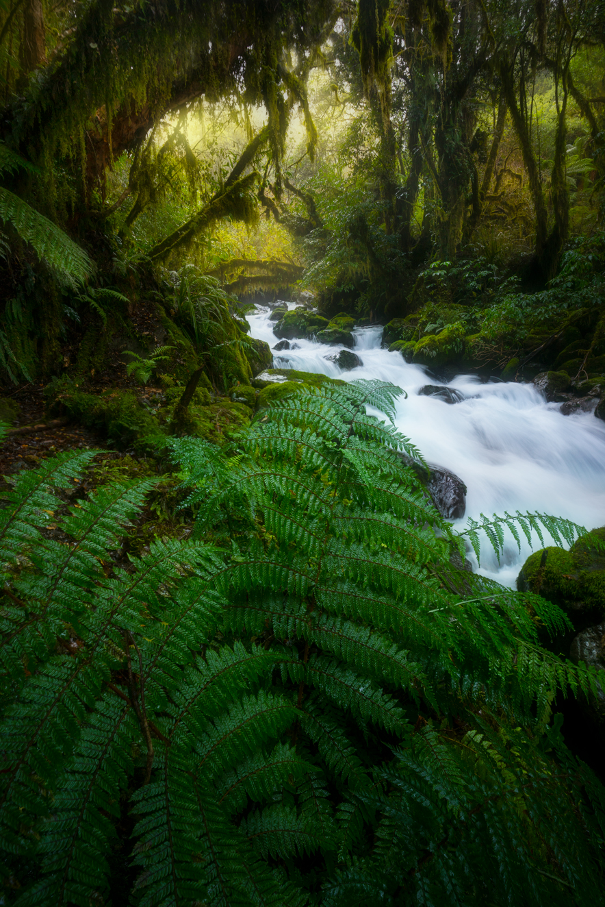 New Zealand lush forest