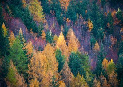 Arrowtown-Trees-NewZeland-Autumn