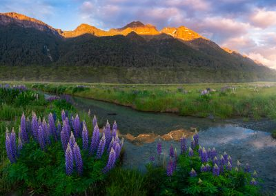 Fiordland-Lupins-Mountains