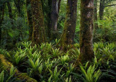 Forest-Fiordland-WilliamPatino