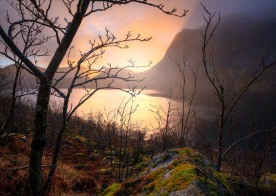 Lofoten-Forest