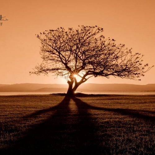 A lone tree at sunset.