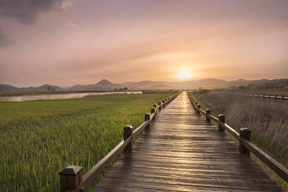 Will Patino - Suncheon 3