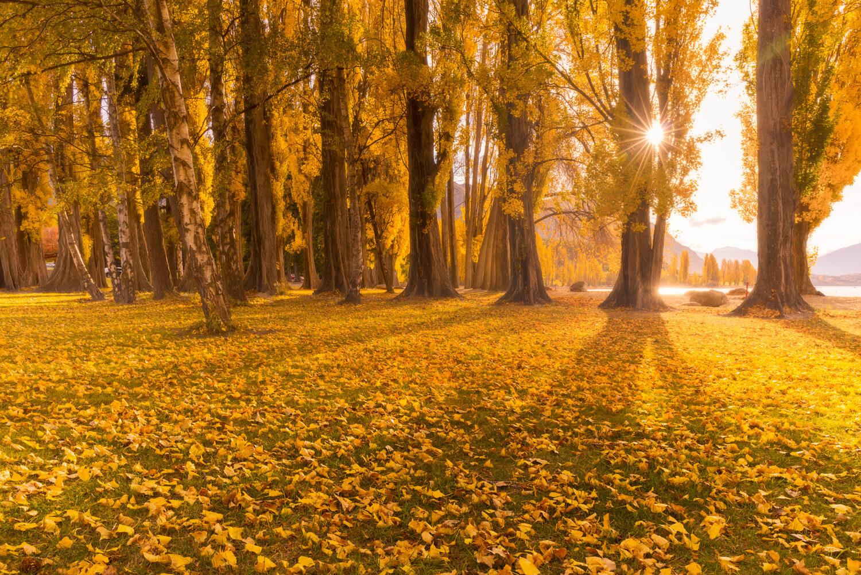 Wanaka autumn tree fall colours