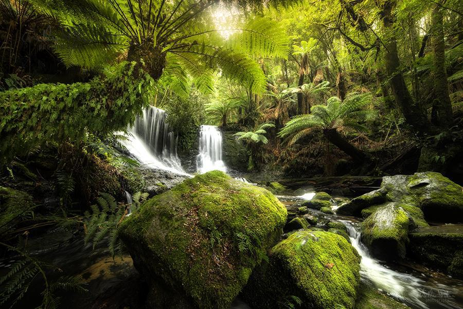 A lush forest in Tasmania.