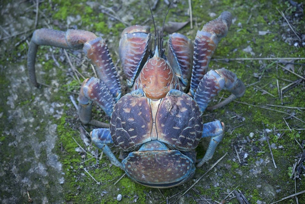 A large colorful crab.