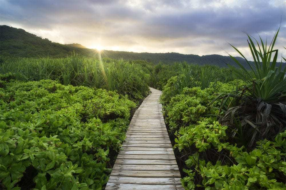 A wooden pathway lading through a landscape.