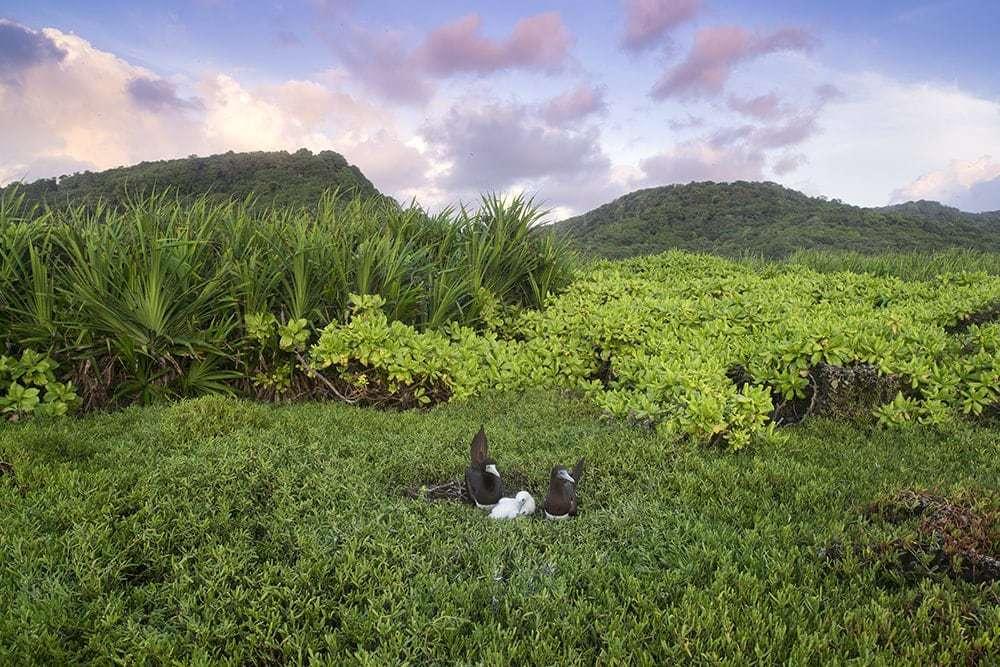 Wild Birds on Christmas Island.