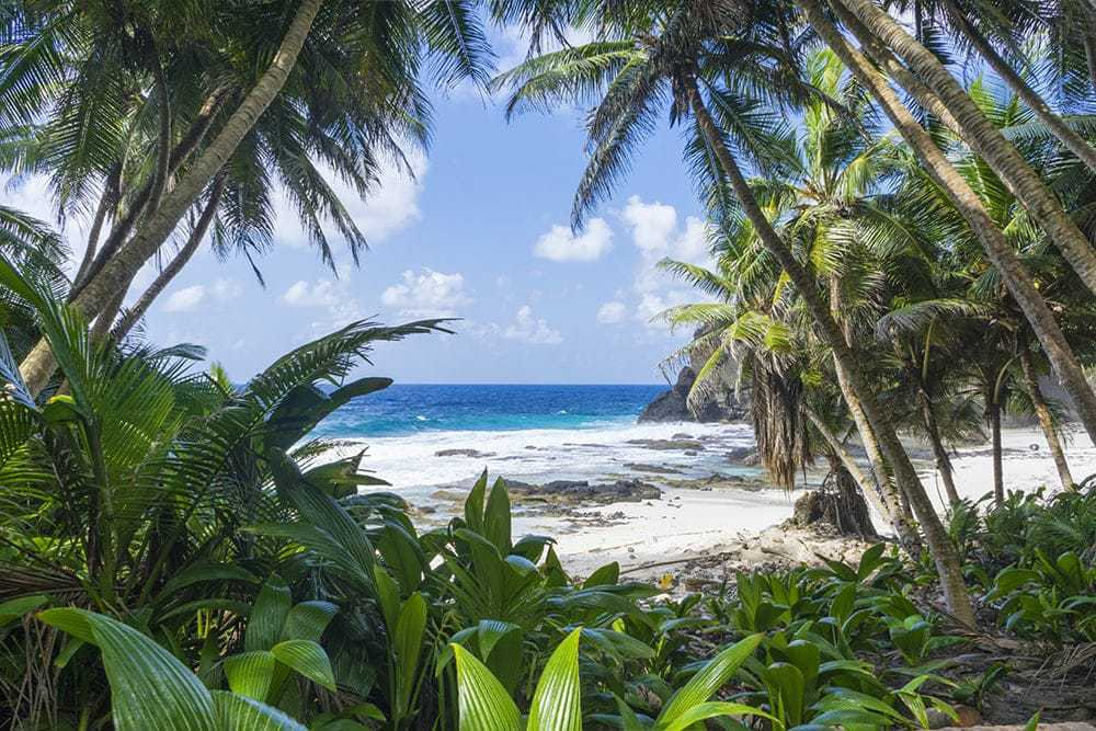 Topical beach with palm trees.