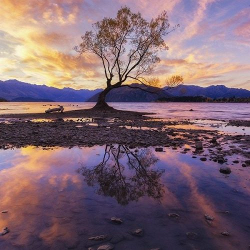 A lone tree in New Zealand