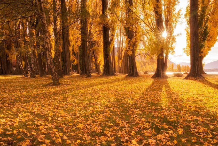 Wanaka, Autumn