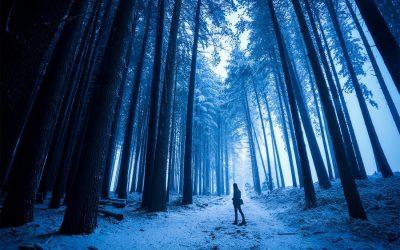 Snowfall – Laurel Hill Sugar Pine Forest