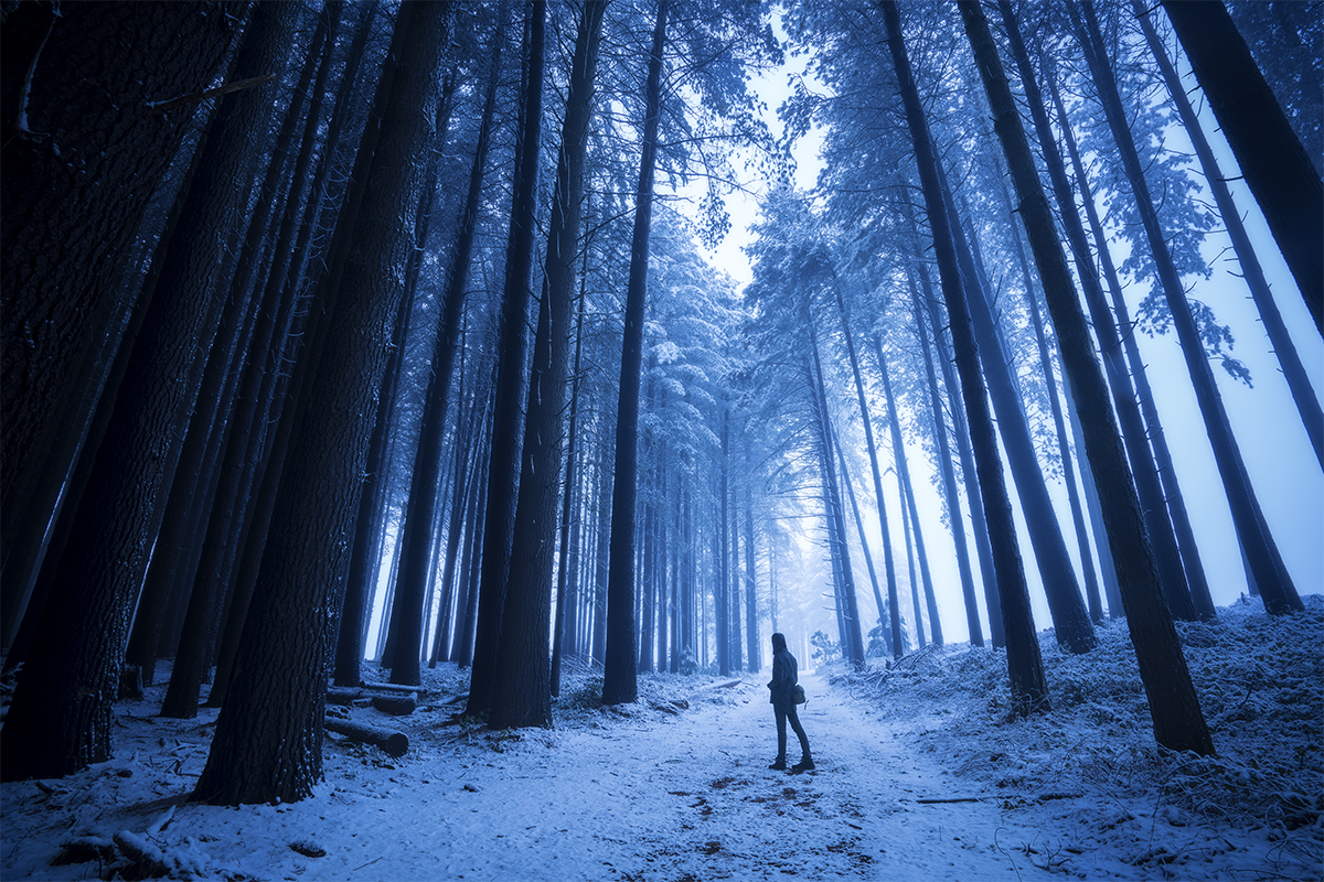 Man standing in a snow covered pine forest