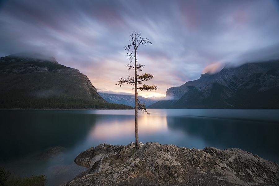 Sunrise, Lake Minnewanka Tree
