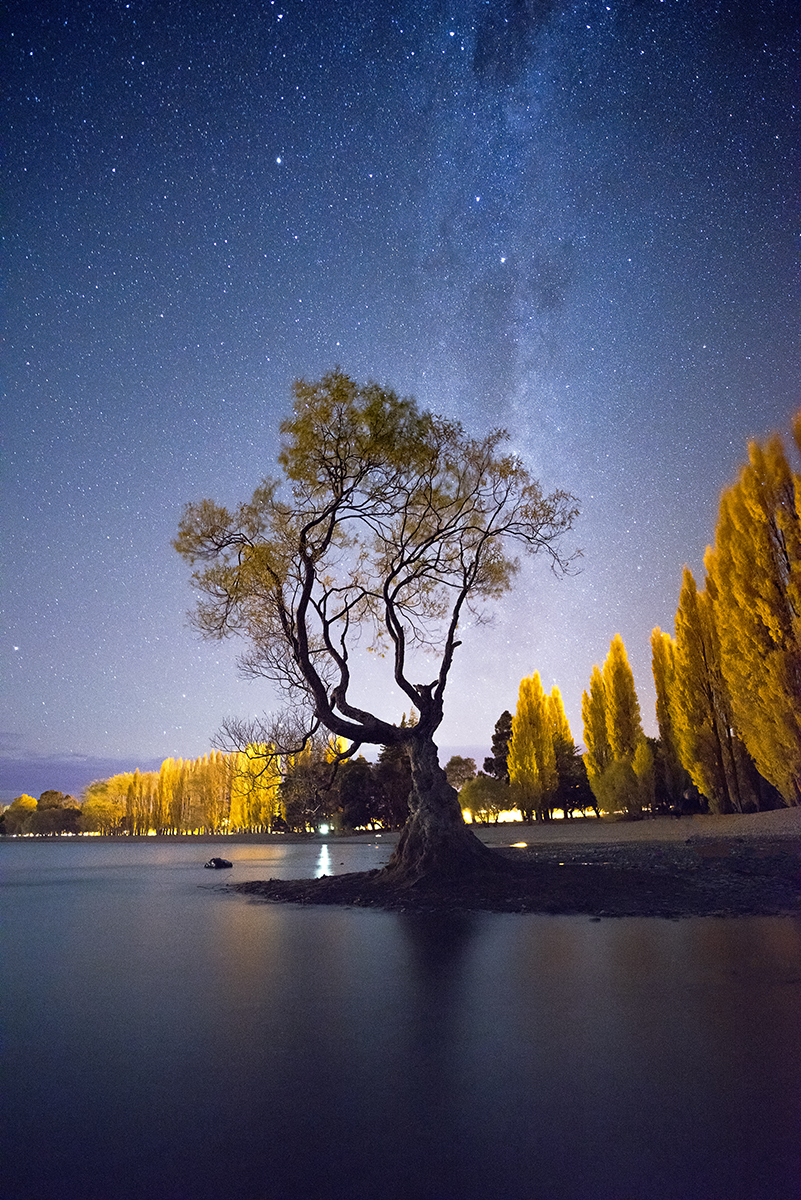 Milky Way over the Wanaka tree New Zealand