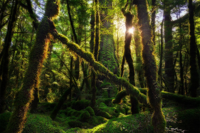 Lush forest New Zealand