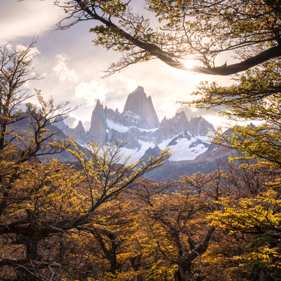 Mount Fitzroy framed by autun trees