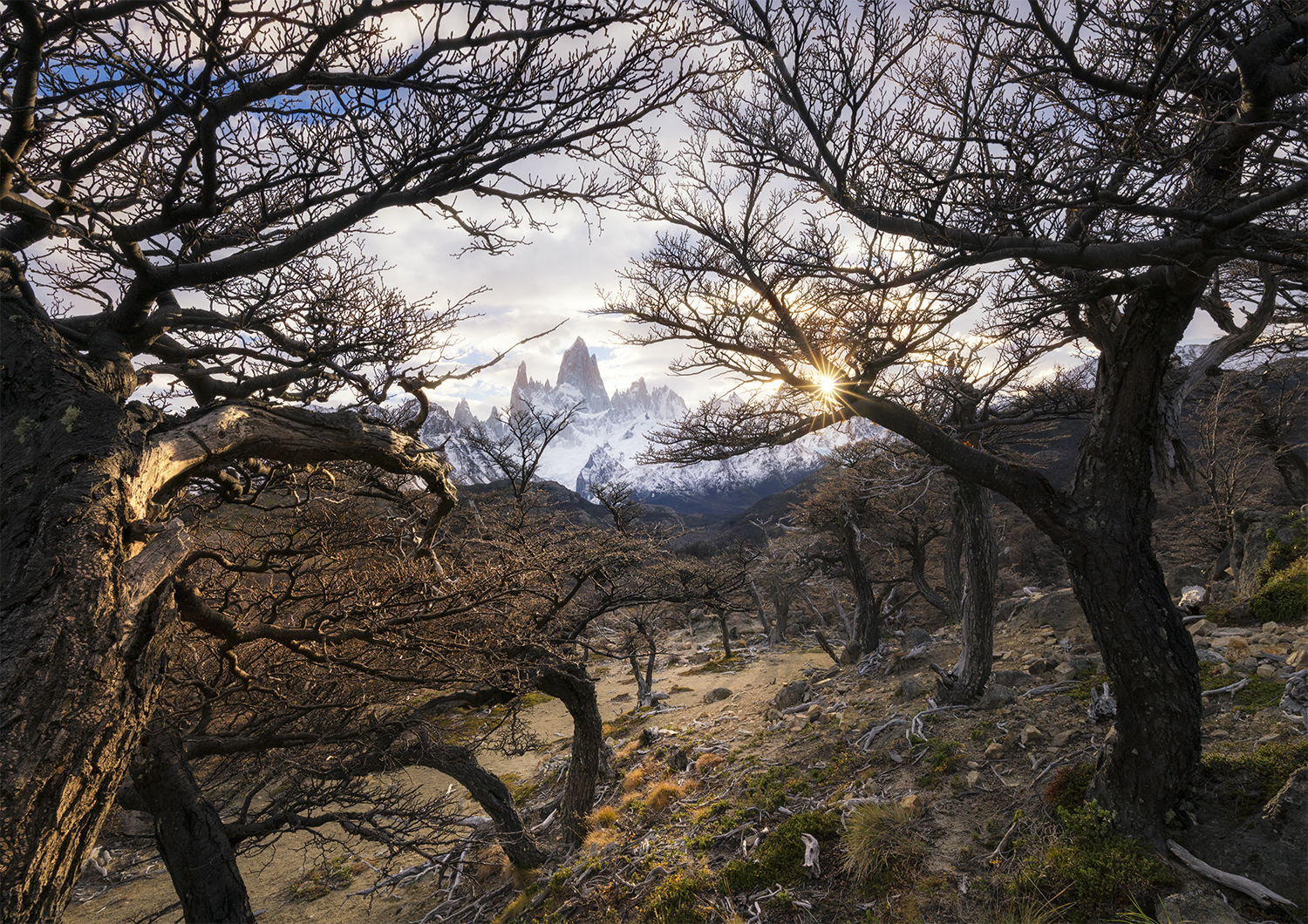 Through the trees, Fitzroy in Patagonia