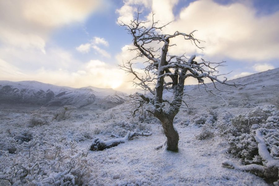 Snow fall, Patagonia tree