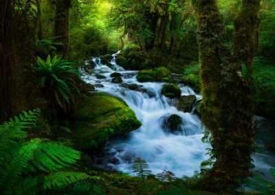 Fiordland-Forest-Cascade-William-Patino